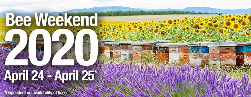 Bee Weekend 2020