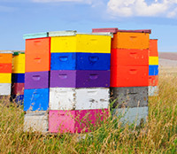 GloryBee Beekeeping