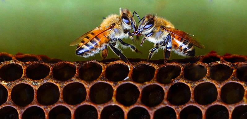 B Corps for Bees