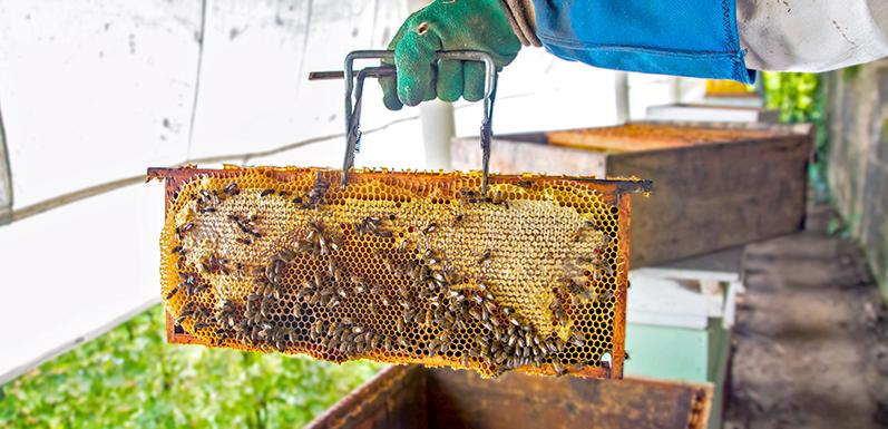 4 Beekeeping Tips To Get The Most Honey From Your Hives