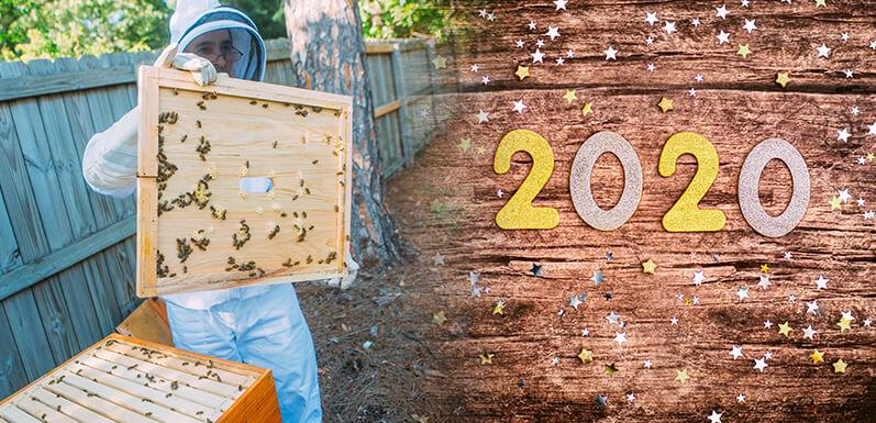 Beekeeping Resolutions for The New Year