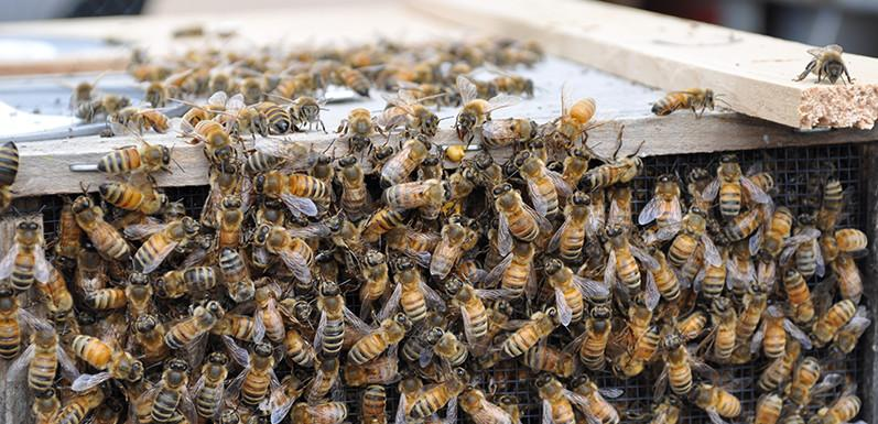 What Goes Into Beekeeping? Bees, Honey, And The Workings Of A Hive