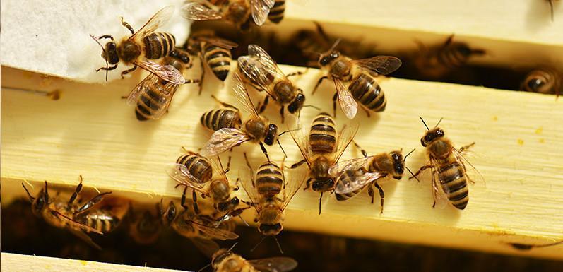 Alan's Vinegar & Sugar Syrup Recipe for Bees
