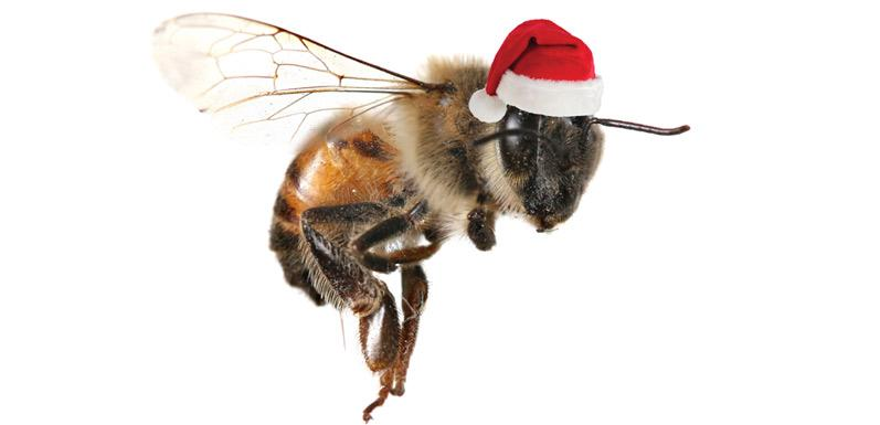 Top Gifts for Your Bees