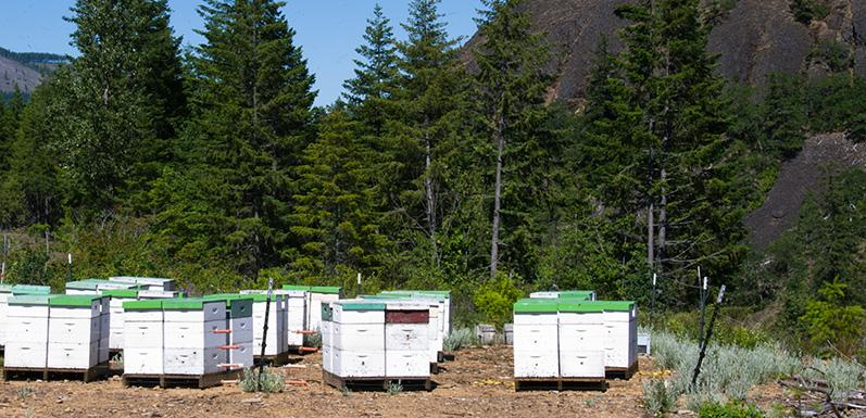 Guest Post: Keeping Predators Away From Your Hives