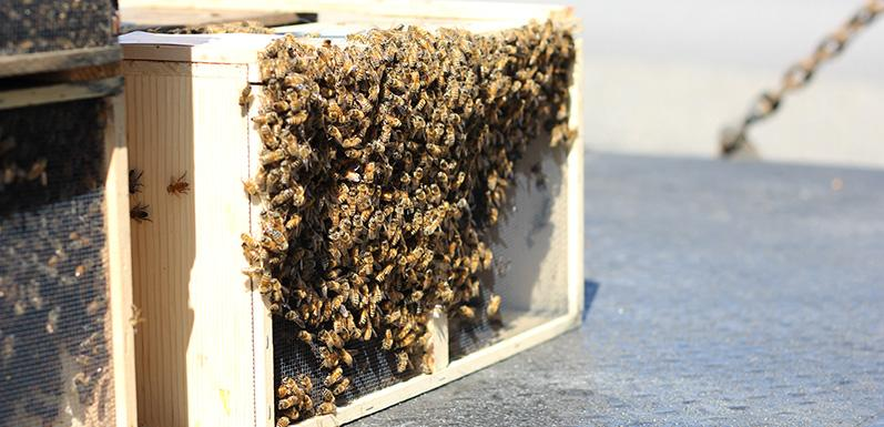 LESSON 9: Packaged Bees and How to Care for Them