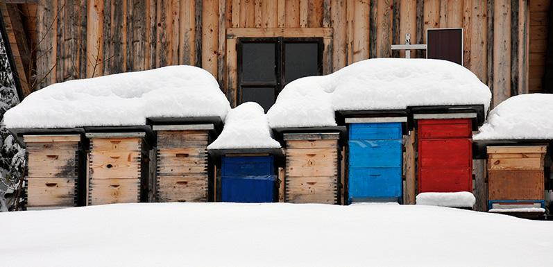 How To Winterize Your Hives [Part 2]