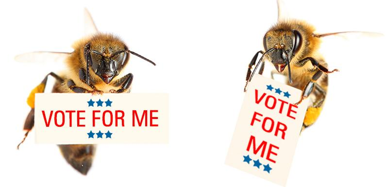 Three ways honey bees can influence the way you vote