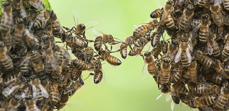 Saving the Bees: Honey Bee Populations on the Rise
