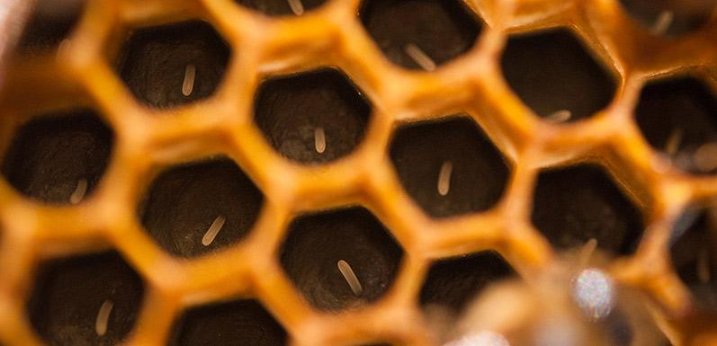 Inside Your Hive: Should You Be Concerned?