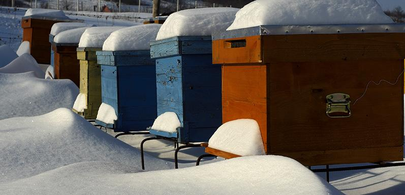Three Things Every Beekeeper Should be Doing Mid-Winter