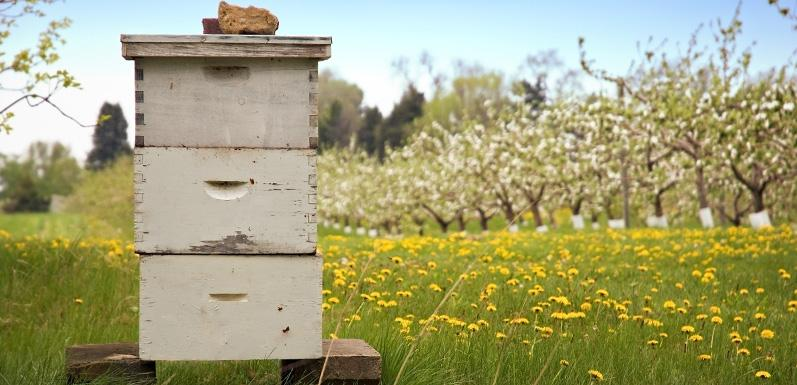 New To Beekeeping? Here's an FAQ For 'Bee'-ginners