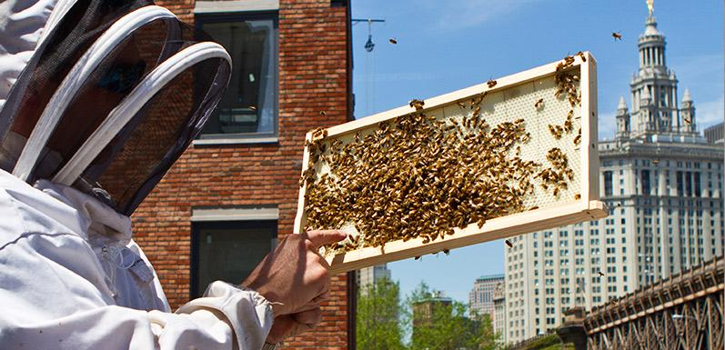 Urban Beekeeping: 5 Steps for Starting Out