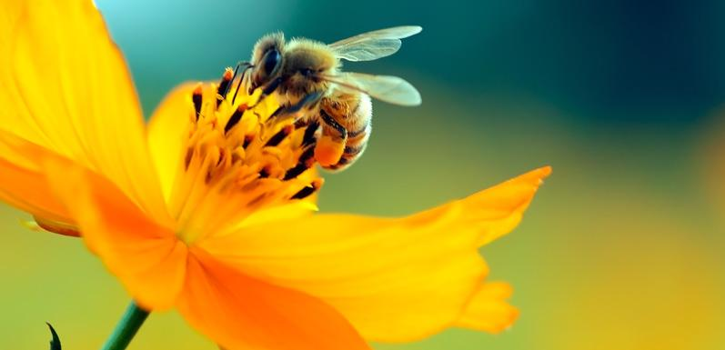 Top 4 Most Harmful Insecticides For Honey Bees