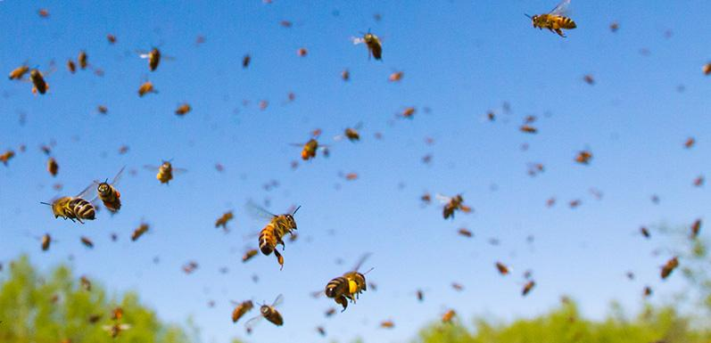Aggressive Bee-havior And How To Prevent It